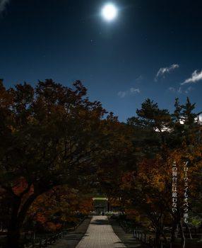 「そうだ 京都、行こう。」が25周年を迎えたってよ。紅葉の京都の写真でオマージュフォト!