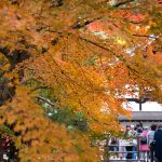 秋の京都南禅寺かいわい紅葉狩り。大勢の方が訪れる名所での写真はこう撮れ!な私見。