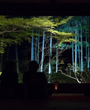 春の京都大原に浮かぶ幽玄、宝泉院の「春の夜灯り」に行ってきた