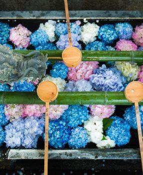 紫陽花のかくれた名所、京都・西山にある柳谷観音/楊谷寺の花手水はインスタ映えマチガイなしの名所です!