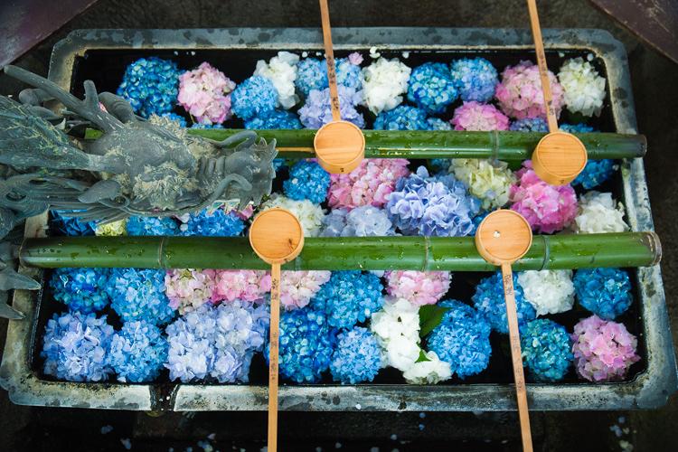 紫陽花のかくれた名所、京都・西山にある柳谷観音/楊谷寺はインスタ映え間違いなしでした