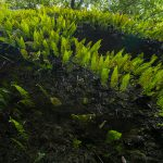 素晴らしきシダの世界!高知県にある神秘のスポット「伊尾木洞」に行ってきた